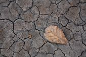 Dry Brown Leaf On Cracked Earth