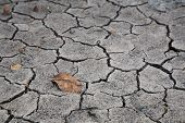 Dry Brown Leaf On The Cracked Earth
