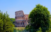 Colosseum with tree