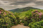 Appalachian Trail Cuts Through Rhododendron Garden