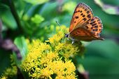 orange butterfly on a yellow flower