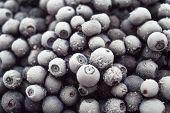 Lots Of Frozen Blueberries