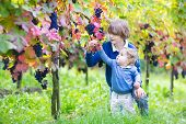 Adorable Baby Girl And Her Cute Brother Playing Together In Autumn Vine Yard Picking Fresh Grapes
