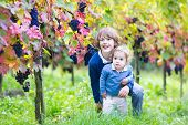 Cute Laughing Brother And Baby Sister In A Sunny Autumn Vine Yard Picking Ripe Fresh Grapes