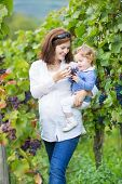 Beautiful Young Mother And Her Adorable Baby Daughter Walking In Autumn Vine Yards