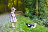 Adorable Baby Girl In A Festive Dress Playing With A Wild Duck In A Beautiful Autumn Park