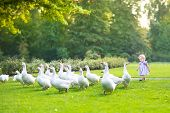 image of baby goose  - Funny Baby Girl Chasing Wild Geese In A Park On A Beautiful Autumn Evening - JPG