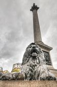 Lion Statue, Trafalgar Square, London, Uk