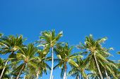 Blue Sky With Palm Trees In Boracay