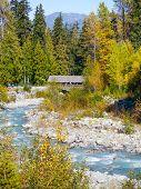 Autumn at Fitzsimmons Creek Whistler