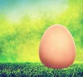 Unpainted Easter egg on spring grass. Nature blur background. Holiday theme.