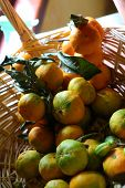 Tangerines In A Wattled Basket