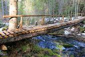 wooden bridge in spring forest