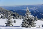 Winter landscape with frozen pines in mountains