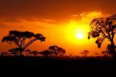 African sunset in Masai Mara