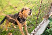 picture of dog-house  - Cute guard dog behind fence - JPG