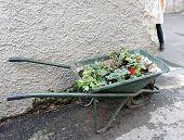 Wheelbarrow Ready For Use