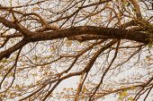 Tree Branch In Autumn