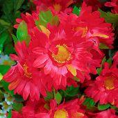 fake chryshanthemums floral background