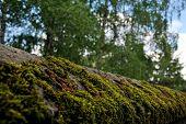 moss on a fence