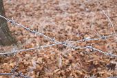 Barbed Wire Fence Covered With Hoarfrost