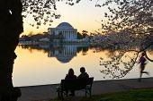 Washington DC - Thomas Jefferson Memorial during Cherry Blossom Festival at Tidal Basin.