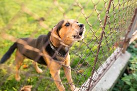 foto of cute animal face  - Cute guard dog behind fence - JPG