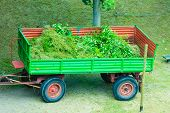 picture of trailer park  - Works in public park. Tractor - trailer with tree branches. Environment cleaning concept ** Note: Soft Focus at 100%, best at smaller sizes - JPG