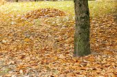 foto of huddle  - leaves on the trees fell on the ground - JPG