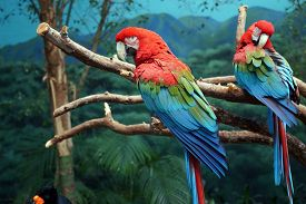 foto of green-winged macaw  - A green - JPG