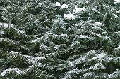 Winter Tree Texture