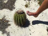 Danger Cactus