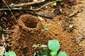 Large  Ant Hill In The Amazon Jungle