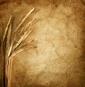 Wheat ears on vintage background