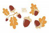 Oak. Branch. Isolated Acorns On White Background. Vector Illustration poster