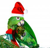 Santa Parrot Holding A Golden Gift Package