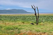 Dry Plant And Marabou Stork, Nakuru Lake