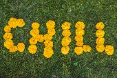 Inscription Chill On The Grass. Yellow Flowers. poster
