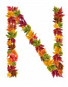 The letter N made from autumn maple tree leaves