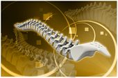 stock photo of coccyx pain  - Digital illustration of human spine in color background - JPG
