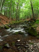 picture of irish moss  - Woodland Stream in Carpatian Wood - JPG