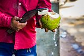 Seller Cutting A Raw Coconut Shell With Sickle To Take Out Coconut Water. Coconut Water Pouring Out  poster