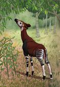 Okapi In Forest
