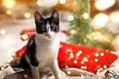 Kitty Cat And Festive Christmas Decorations Background poster