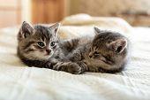 Cute Tabby Kitten Sleeping, Hugging, Kissing On White Paid At Home. Newborn Kitten, Baby Cat, Kid An poster