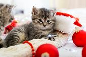 Funny Little Kitten Plays With A Christmas Decor.adorable Tabby Kitten Lies On White Plaid. Christma poster
