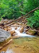 Wreckage Of Trees In A Mountain Forest River