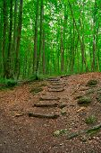 Trail In The Forest Of Wooden Steps