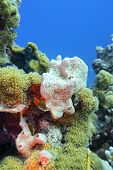 Colorful Coral Reef At The Bottom Of Tropical Sea, White Sea Sponge, Underwater Landscape poster