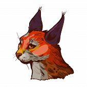 Caracal Wild Cat Isolated Vector Illustration. Hand Drawn Color Aracal Caracal Sketch Animal. Medium poster